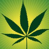 Cannabis ble lov, men gatesalget fortsatte